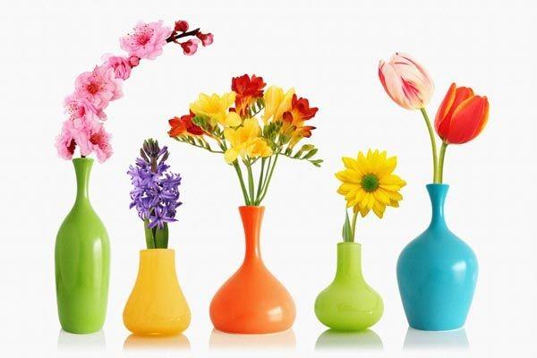 برای گیاهان بزرگ و زیاد باید از گلدان های بزرگ استفاده کنید.