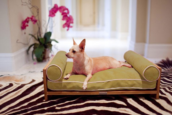 حیوانات برای استراحت و خواب به مبل و تختخواب نیاز دارند.