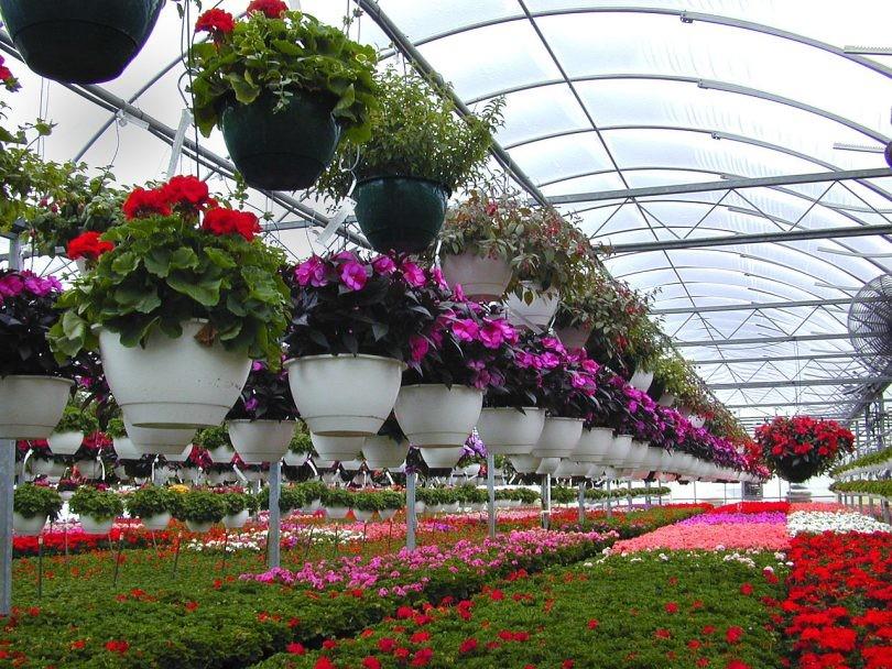 گلخانه برای کشت گیاهان در شرایط غیرممکن راه اندازی می شود.